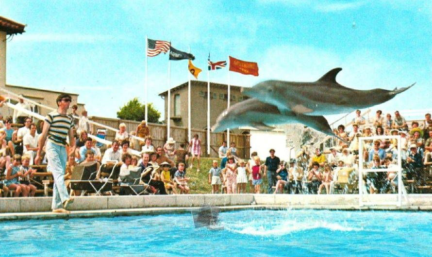 Flipper and Jenky, Zoo & Marineland.